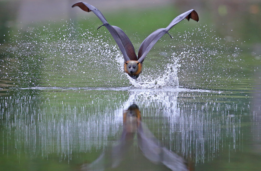 Water Spray by Michael Cleary on 500px.com