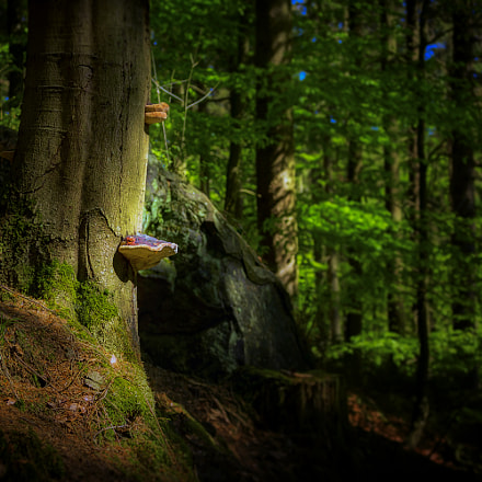 in the forest, Canon EOS 6D, Canon EF 35-70mm f/3.5-4.5