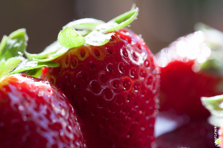 Photograph fresas by Elena Rubio on 500px