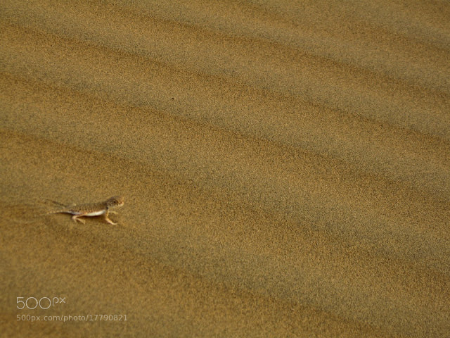 Photograph Desert Camouflage by Abhishek Holla on 500px