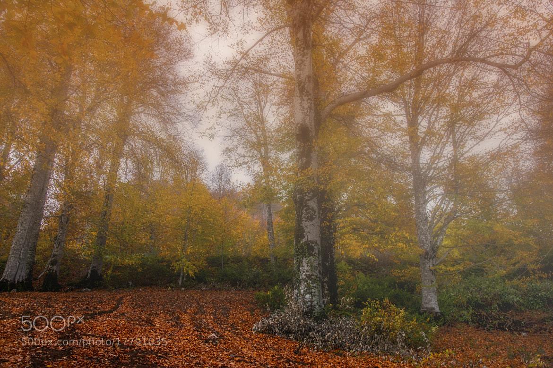 Photograph Untitled by ali yalcin on 500px