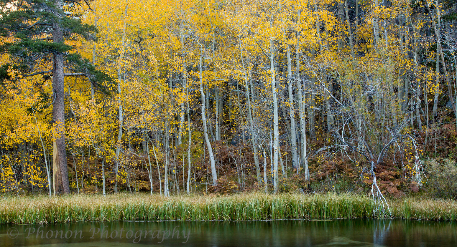 Photograph Bishop Creek Aspens by Joe Dineen on 500px