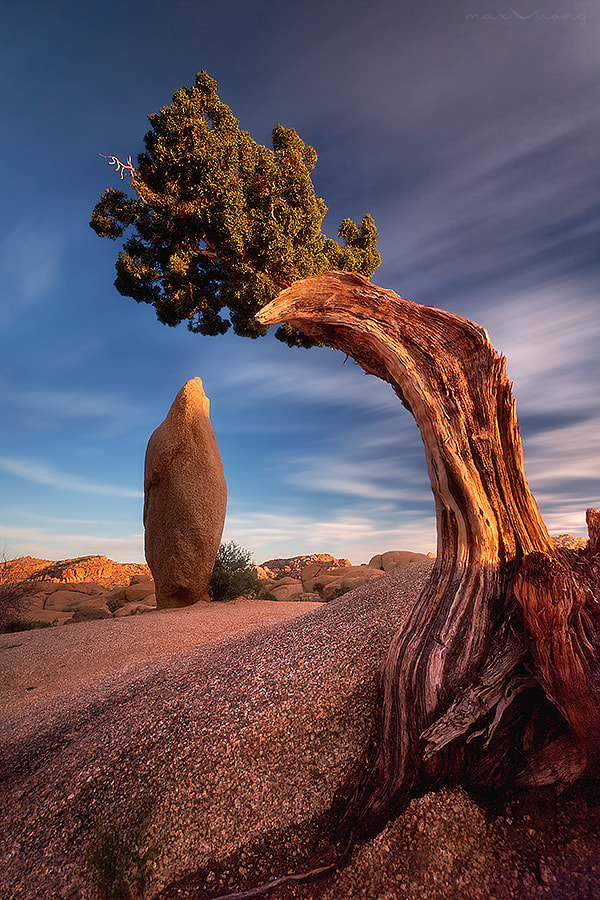 Photograph time traveler (jumbo rocks, joshua tree) by Max Vuong on 500px