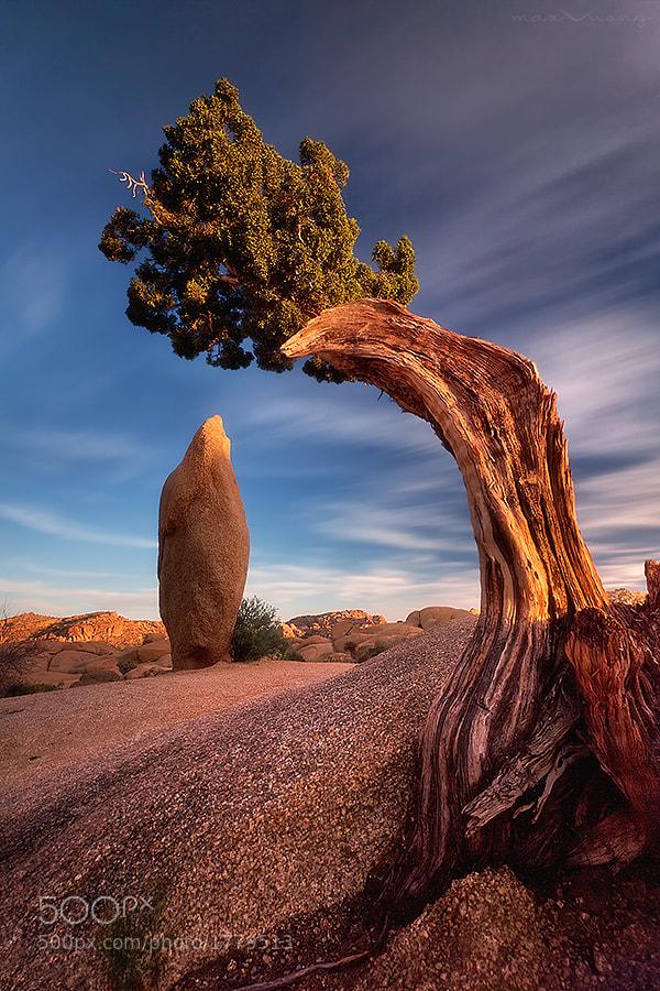 Photograph time traveler (jumbo rocks, joshua tree) by Max Vuong on 500px