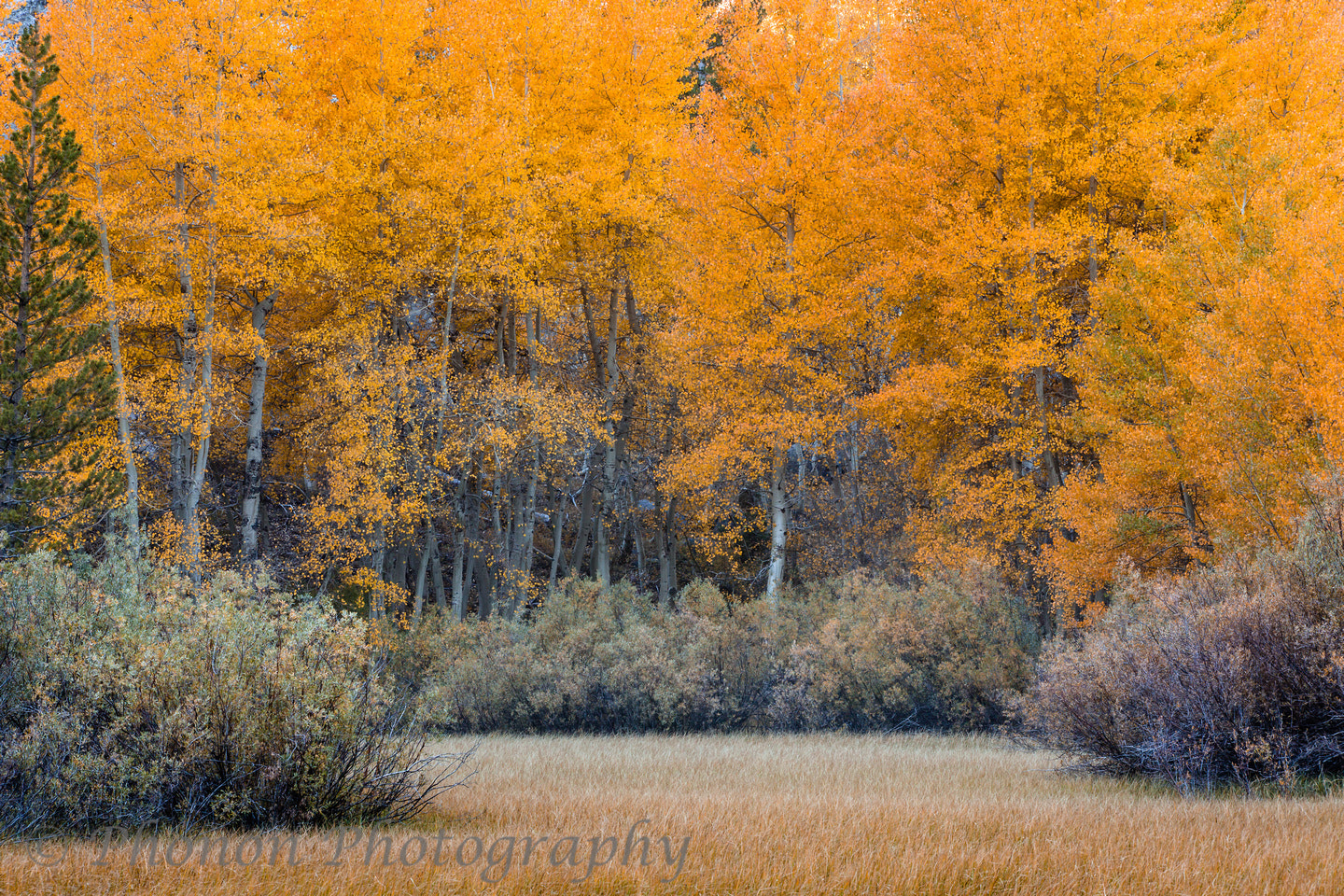 Photograph Autumn Color  by Joe Dineen on 500px