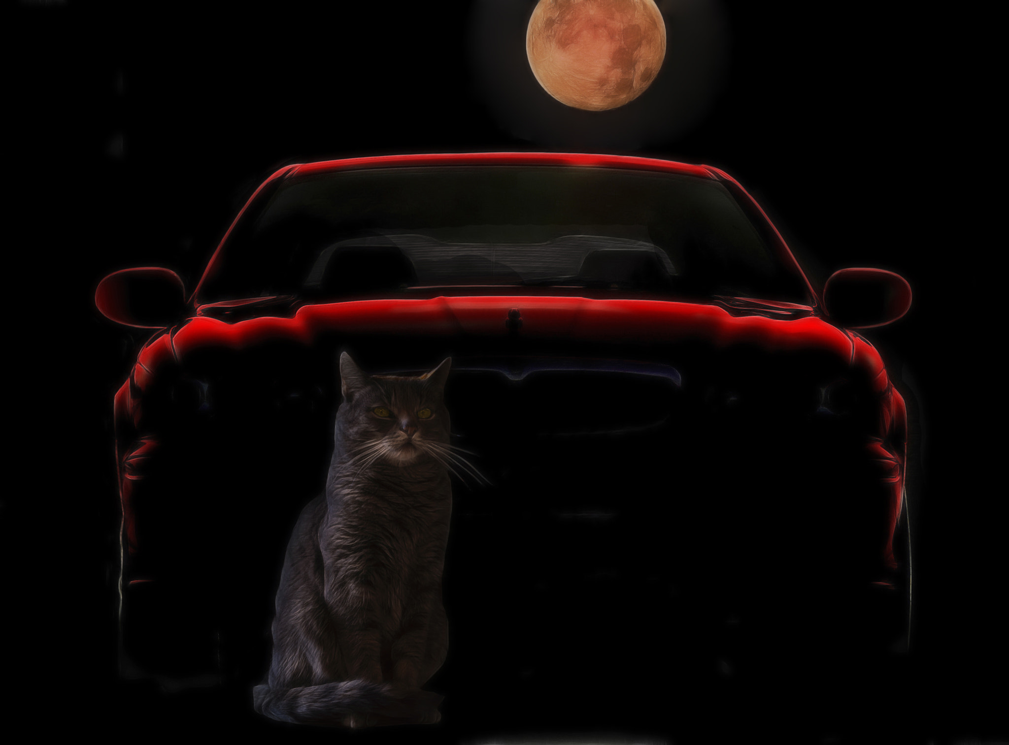 Photograph not every cat is grey by night by Joachim G.  Pinkawa on 500px