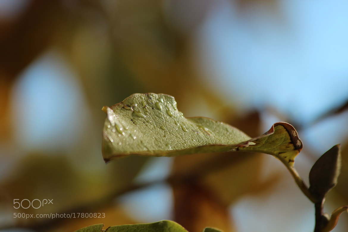Photograph a leaf for you by Paola Fiore on 500px