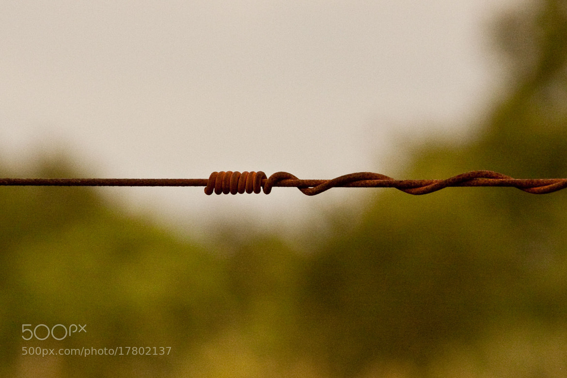 Photograph Wire by Diego Zanandrea on 500px