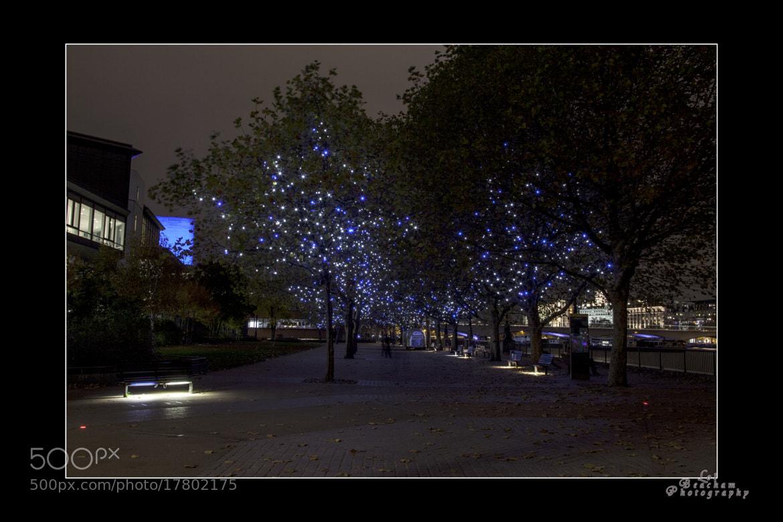 Photograph Tree Lights by Lol Beacham on 500px
