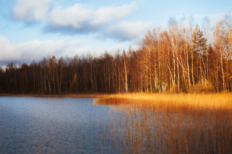 Photograph Autumn forest near lake by Tanya Gorelova on 500px