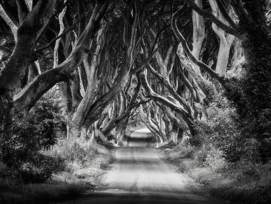 Photograph The Dark Hedges by Michael  Breitung on 500px