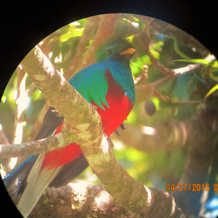 Quetzal in Costa Rica, Canon POWERSHOT SD780 IS