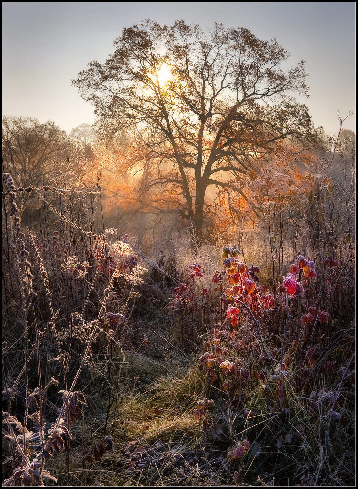 Photograph Autumn story: oak, raspberry and Frost by Alexander Kitsenko on 500px