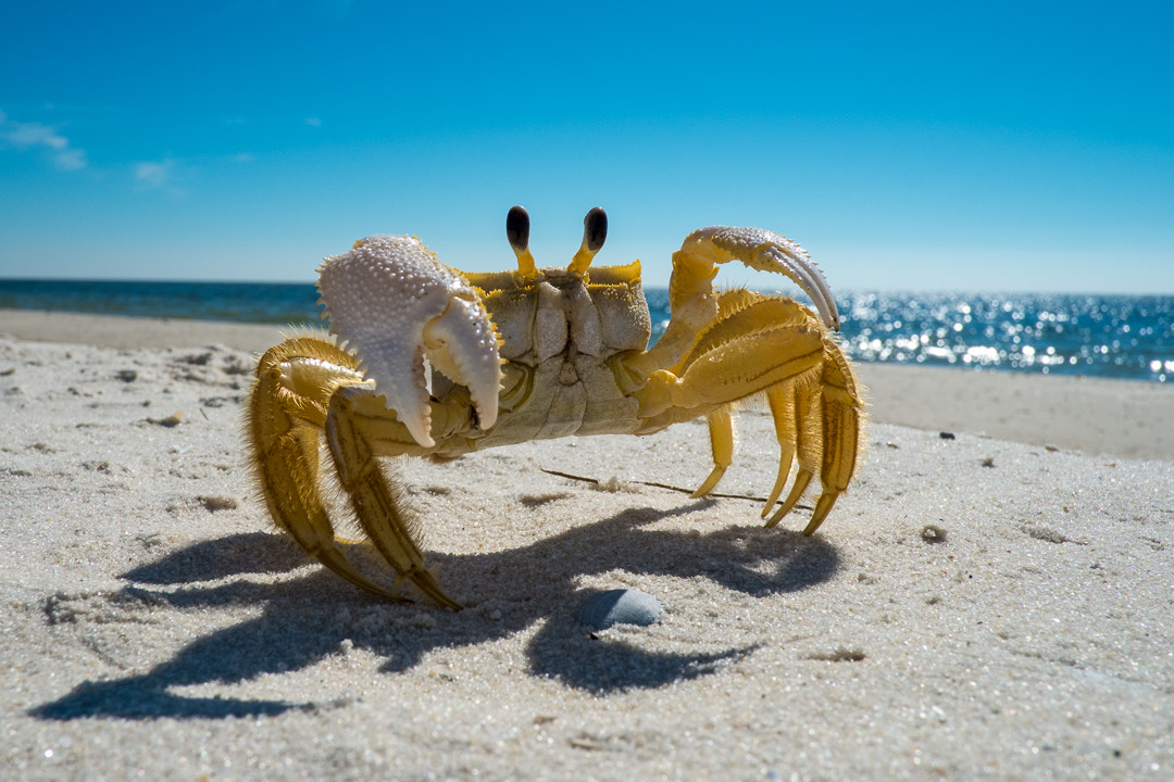 Photograph Sun taning crab by Sébastien Trudeau-Dion on 500px
