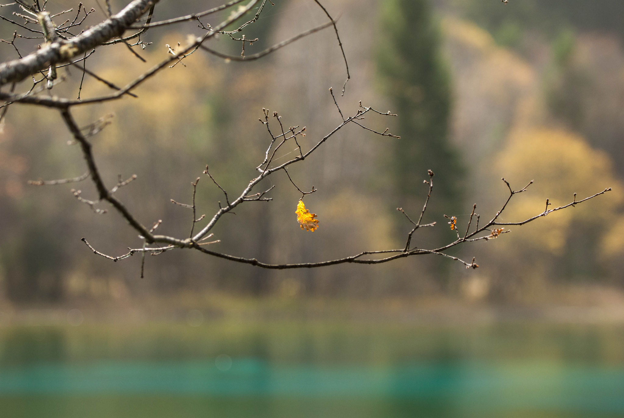 Photograph Last to leaf by Viktor Chan on 500px