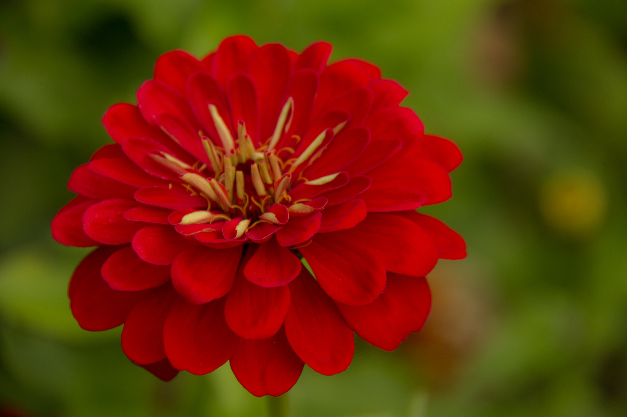 Photograph RED by Anuj  Raj on 500px