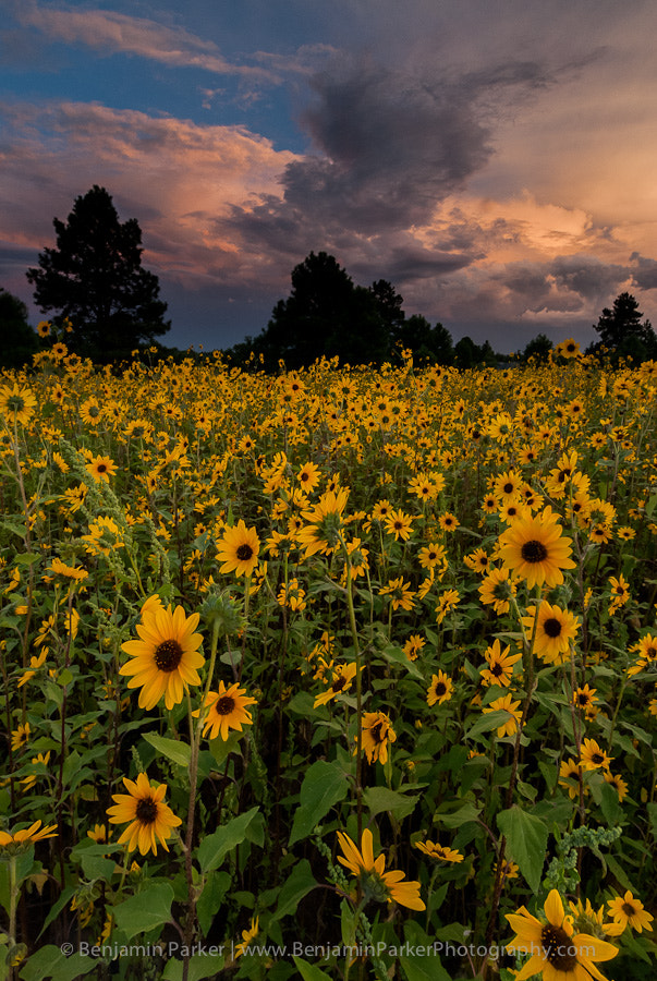 Photograph Flagstaff Monsoon by Benjamin Parker on 500px