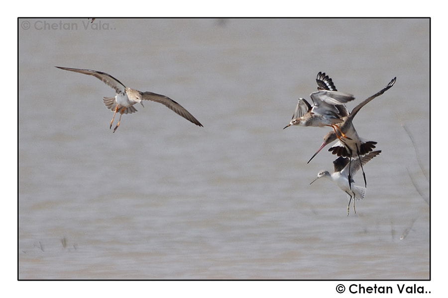 Photograph All in One by chetan vala on 500px