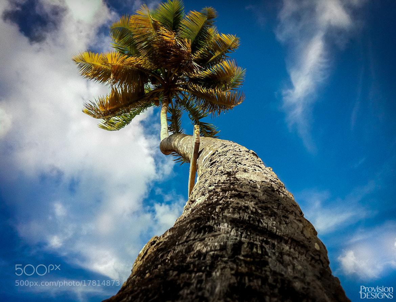 Photograph Coconut Tree by lennon baksh on 500px