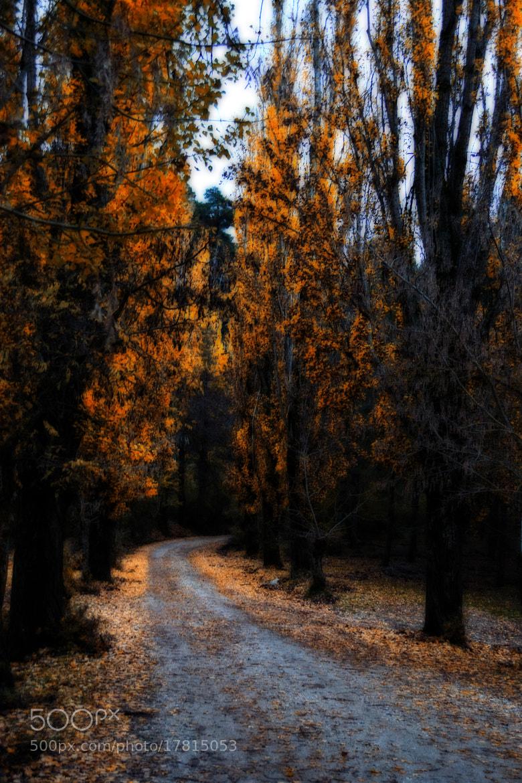 Photograph Autumn  by Pilar Bau on 500px