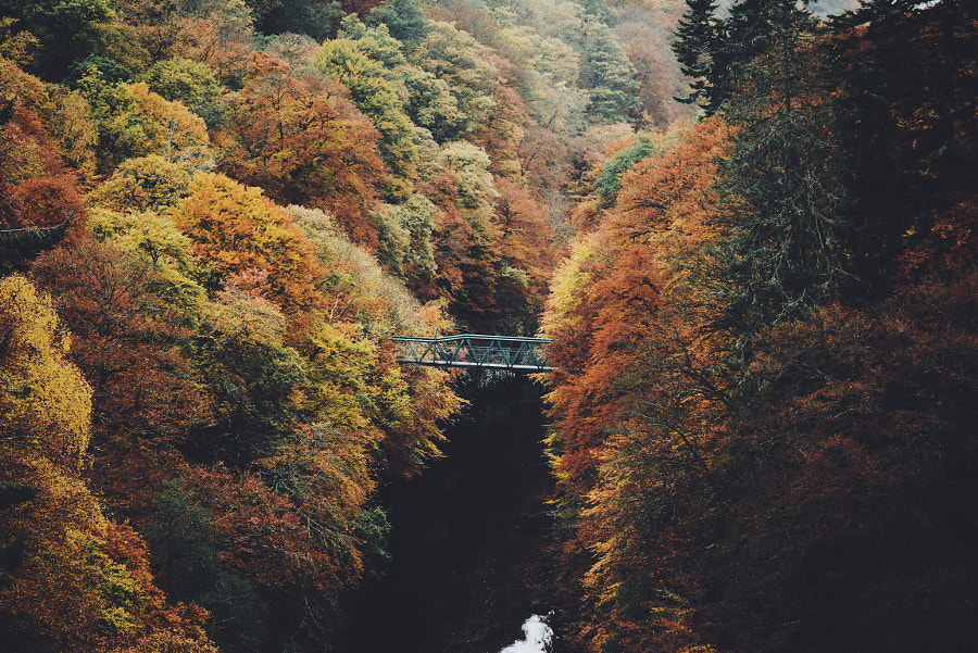 Autumn bridge de Daniel Casson sur 500px.com