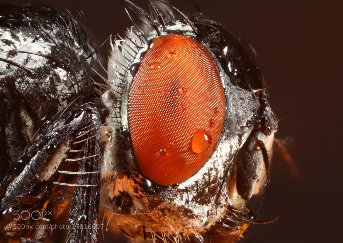 Photograph Mr. Fly by Hadi Mirza on 500px