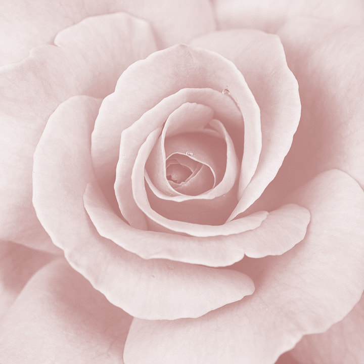 Photograph In the Pink by Julia S on 500px