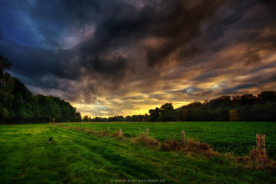 Walk in Autumn 1