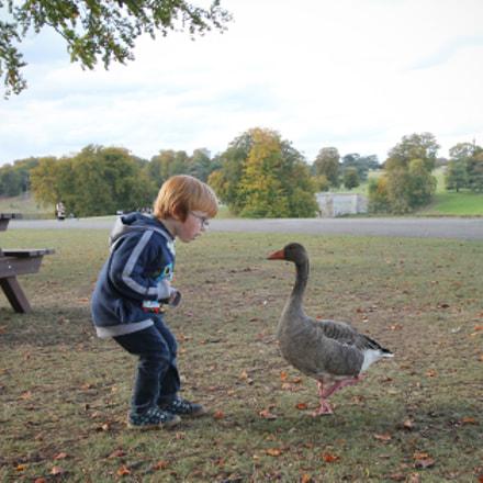 boo to a goose