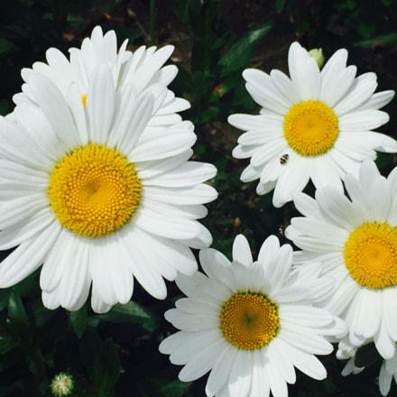 Flores amigas de primavera
