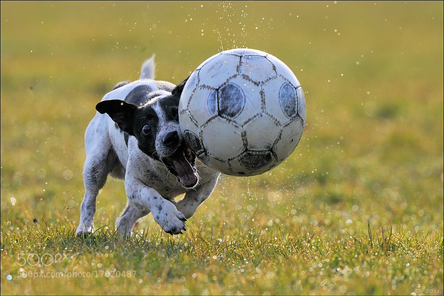 Photograph Let´s play soccer! by Elmar Weiss on 500px