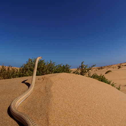 Hunter of the sand, Sony ILCE-7M2, Sigma 15mm F2.8 Fisheye