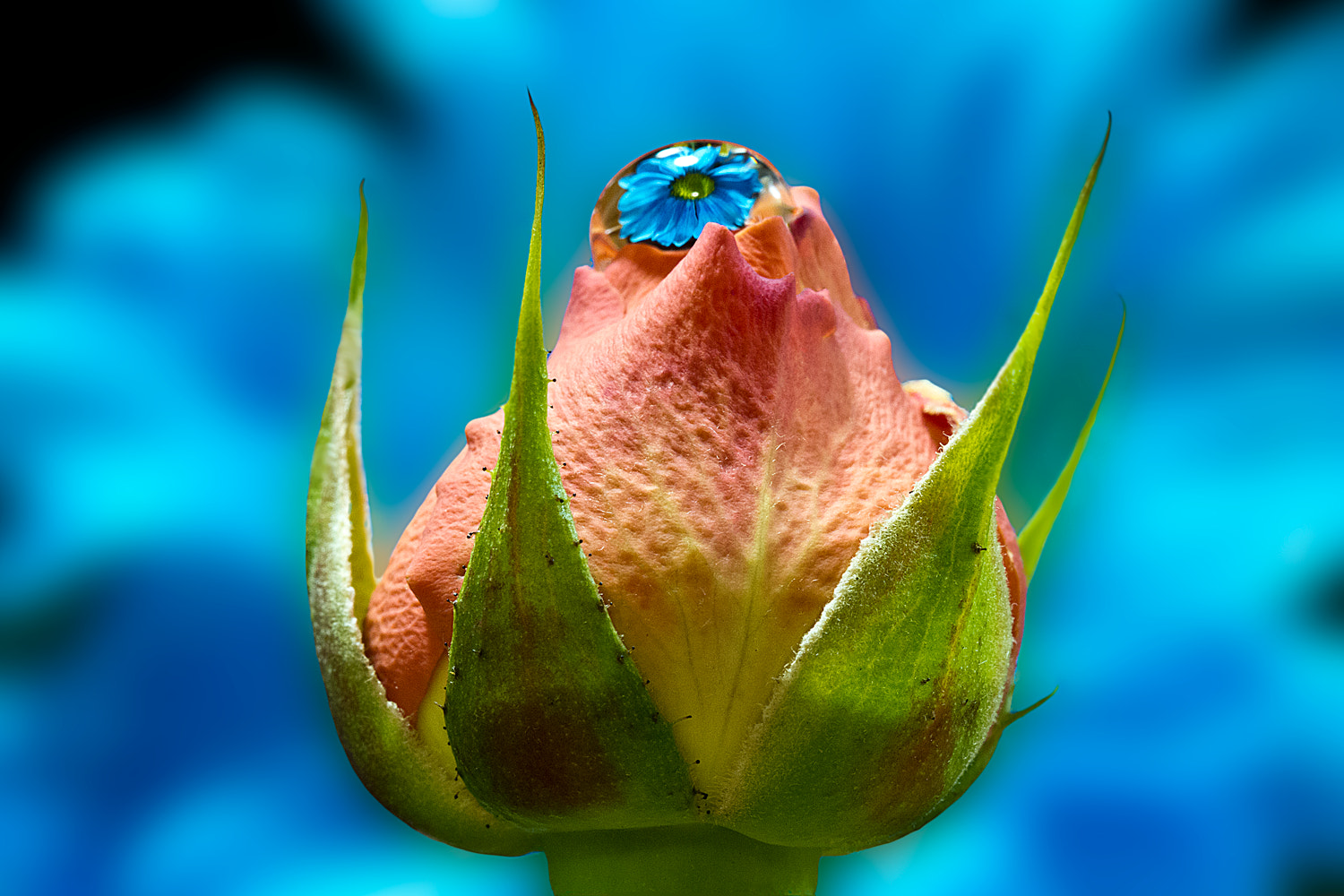 Photograph Blue by Diana Dante on 500px