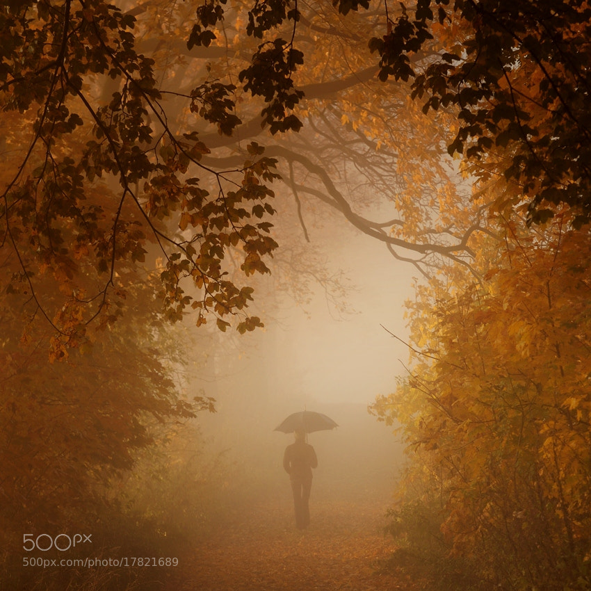 Photograph autumn walk by Sebastian Luczywo on 500px