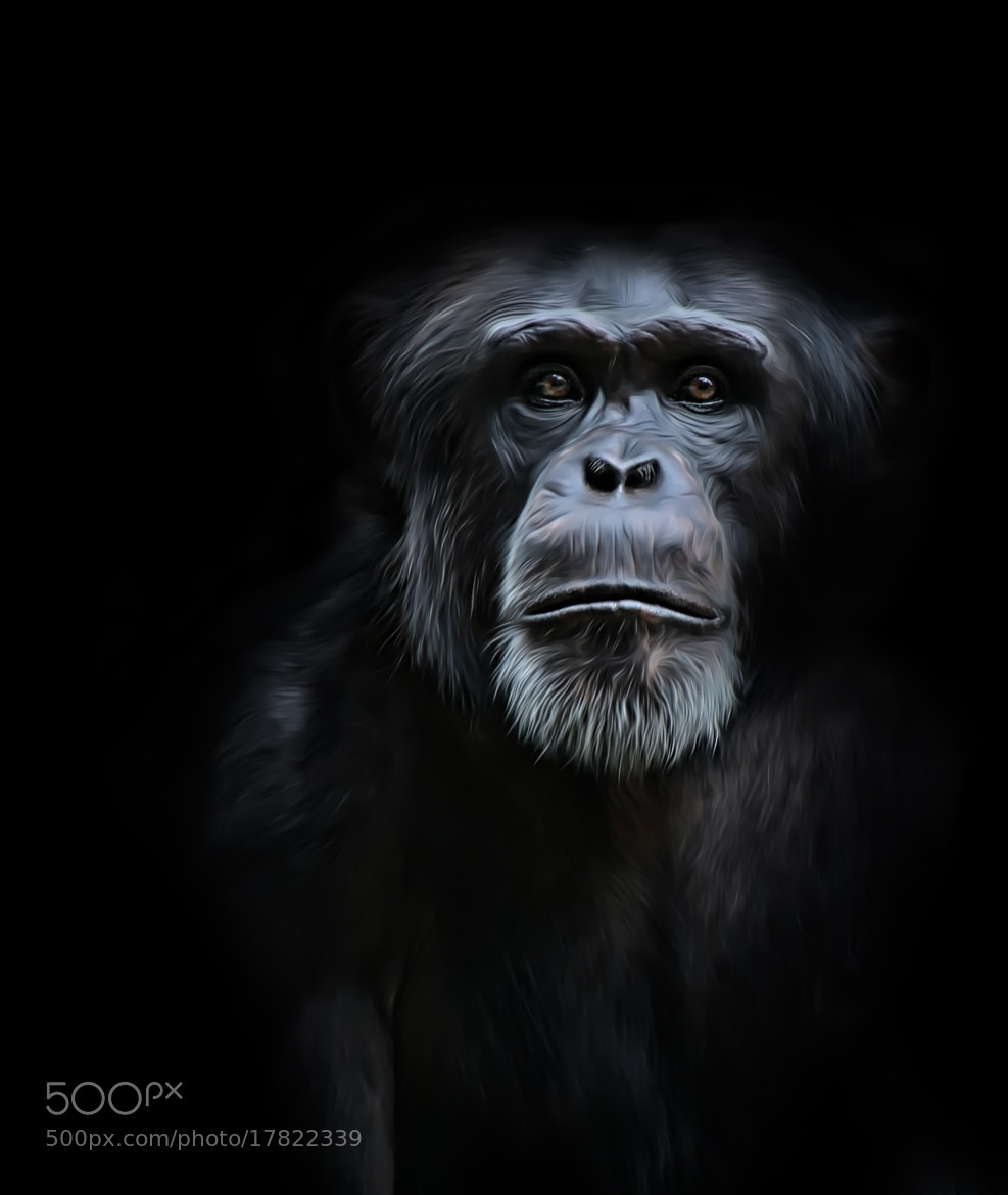 Photograph Monkey... by jan kitel on 500px