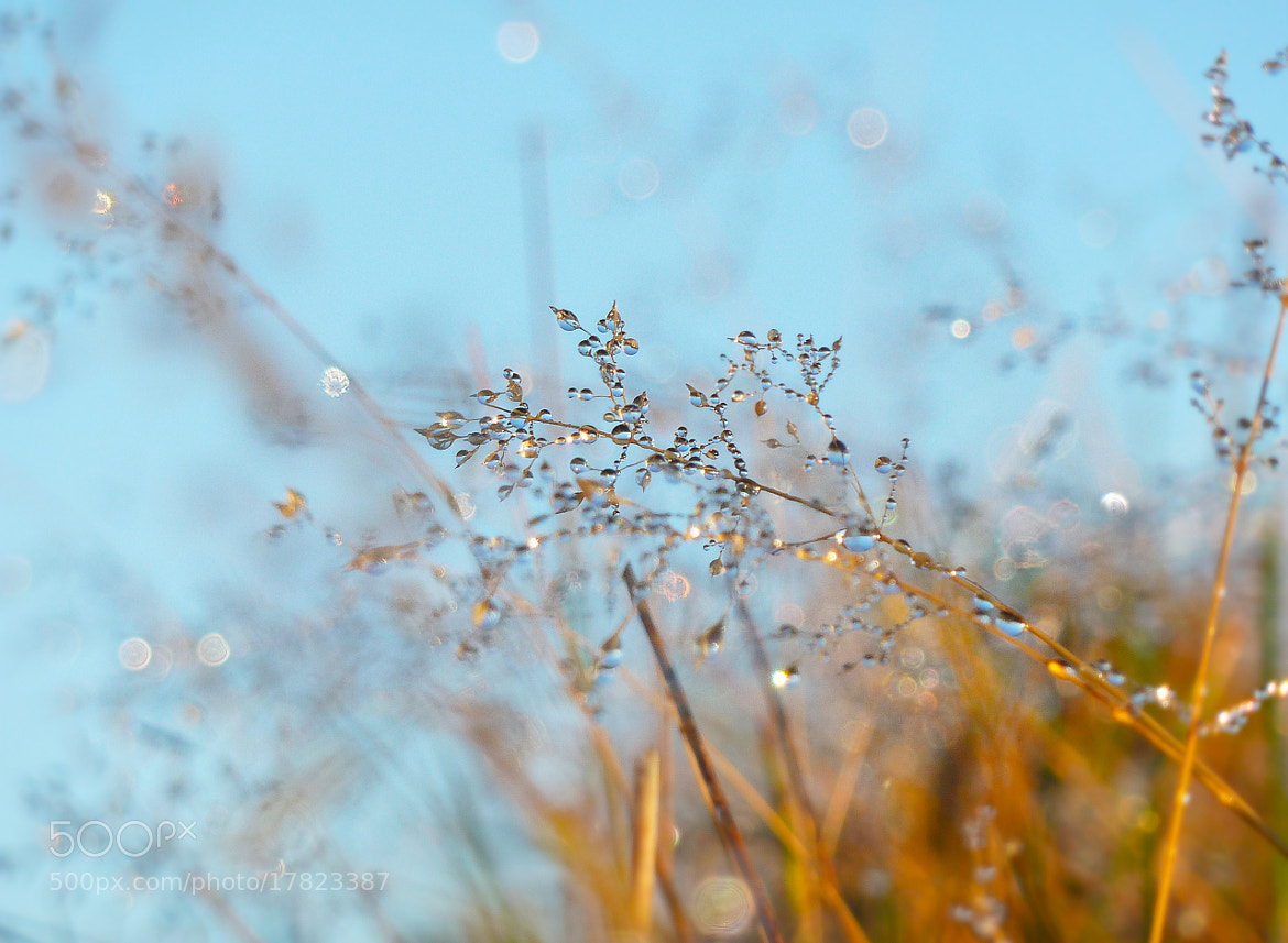 Photograph dewdrops by Tom Inspiriert on 500px