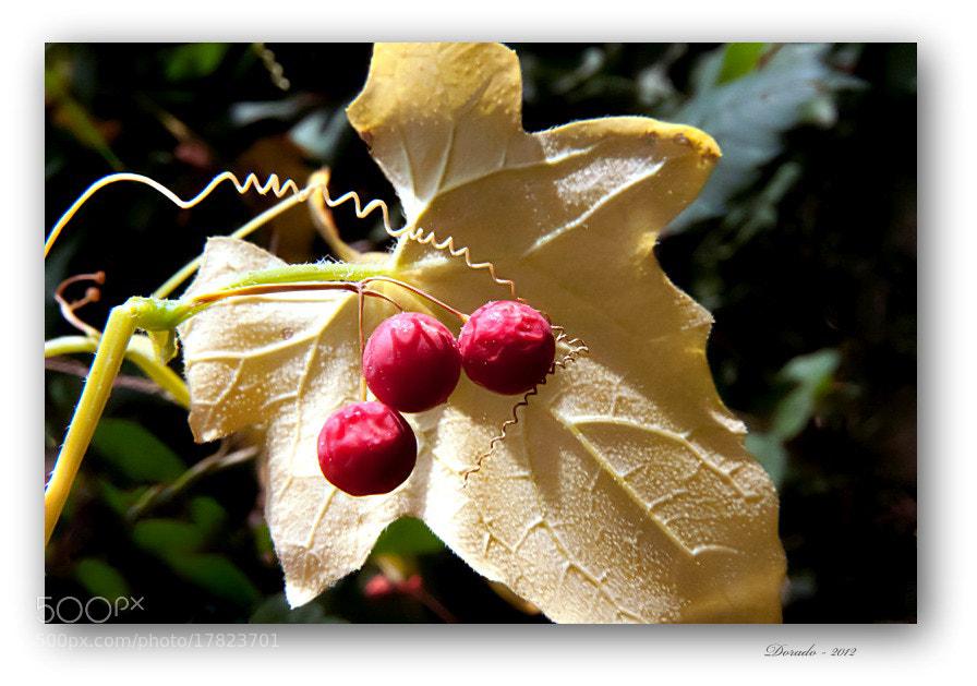 Photograph Autumn magic XLI by Juan Dorado on 500px