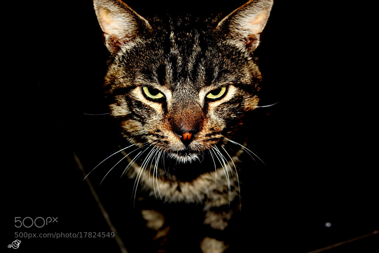 Photograph cat by Ahmet ŞİMŞEK on 500px