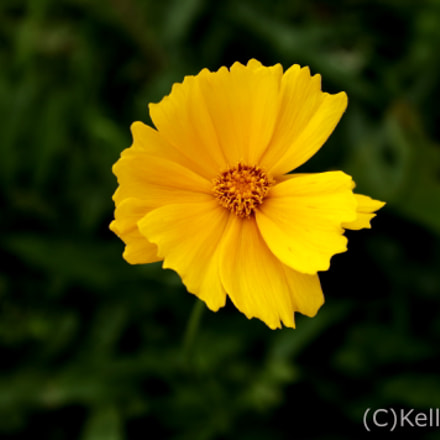 Yellow Beauty, Canon EOS REBEL T3, Canon EF 24-85mm f/3.5-4.5 USM