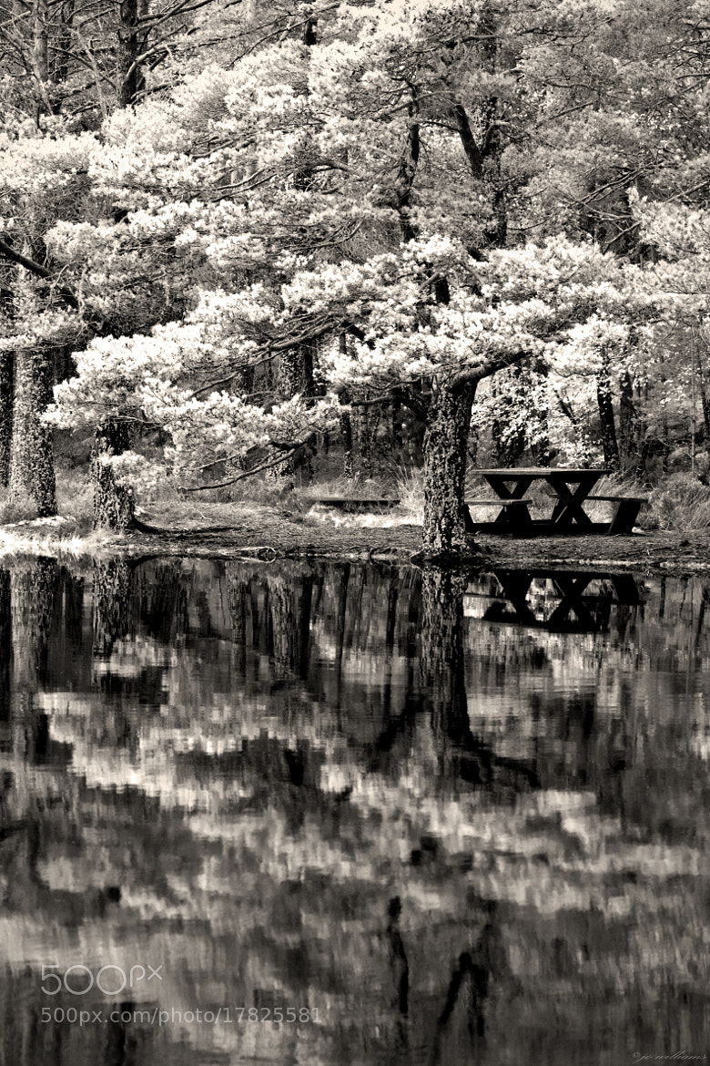 Photograph PICNIC by jo williams on 500px