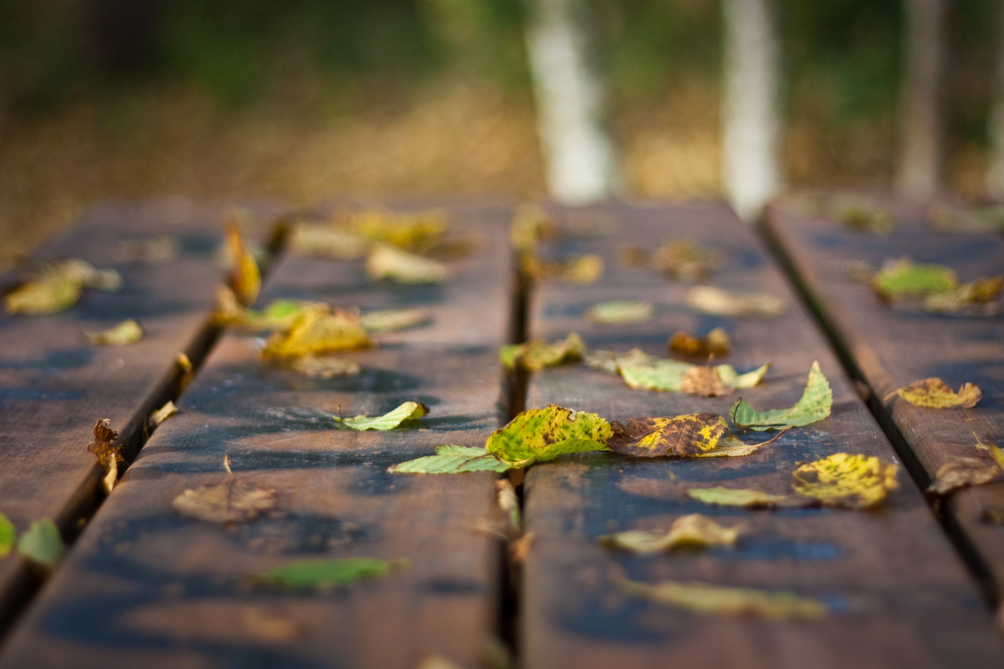 Photograph Leaves on table by Sébastien Puissegur on 500px