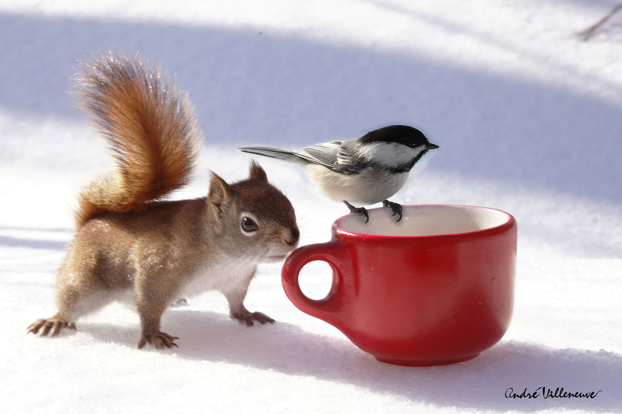 Photograph The bird and the squirrel by Andre Villeneuve on 500px