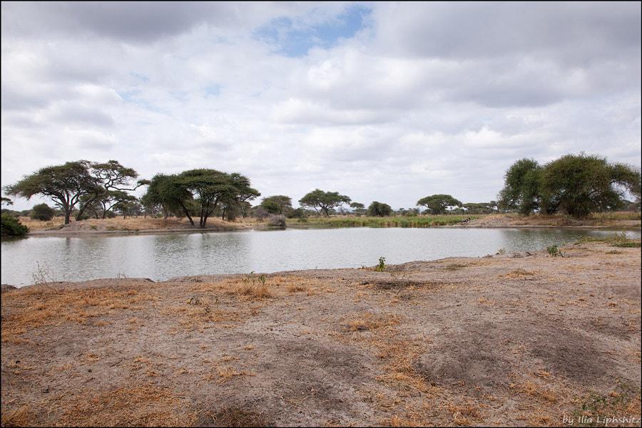 Landscapes of Tarangire №1