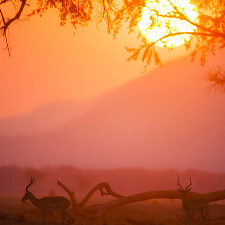 Sundowner, Mana Pools National, Nikon D3X, AF-S VR Nikkor 600mm f/4G ED