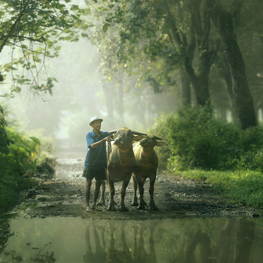 Photograph good morning  by asit  on 500px