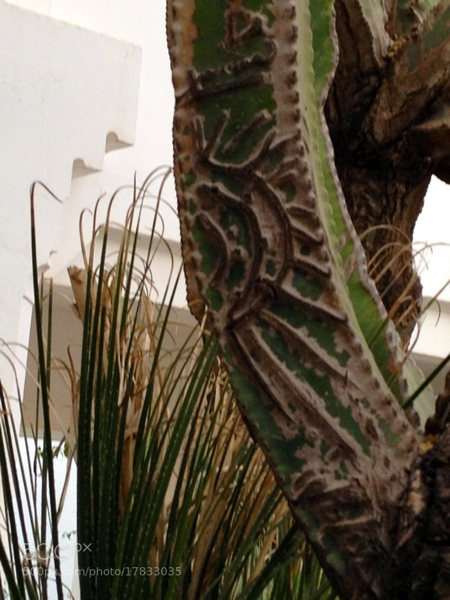 Photograph Carved Cactus by Charlotte Whatling on 500px