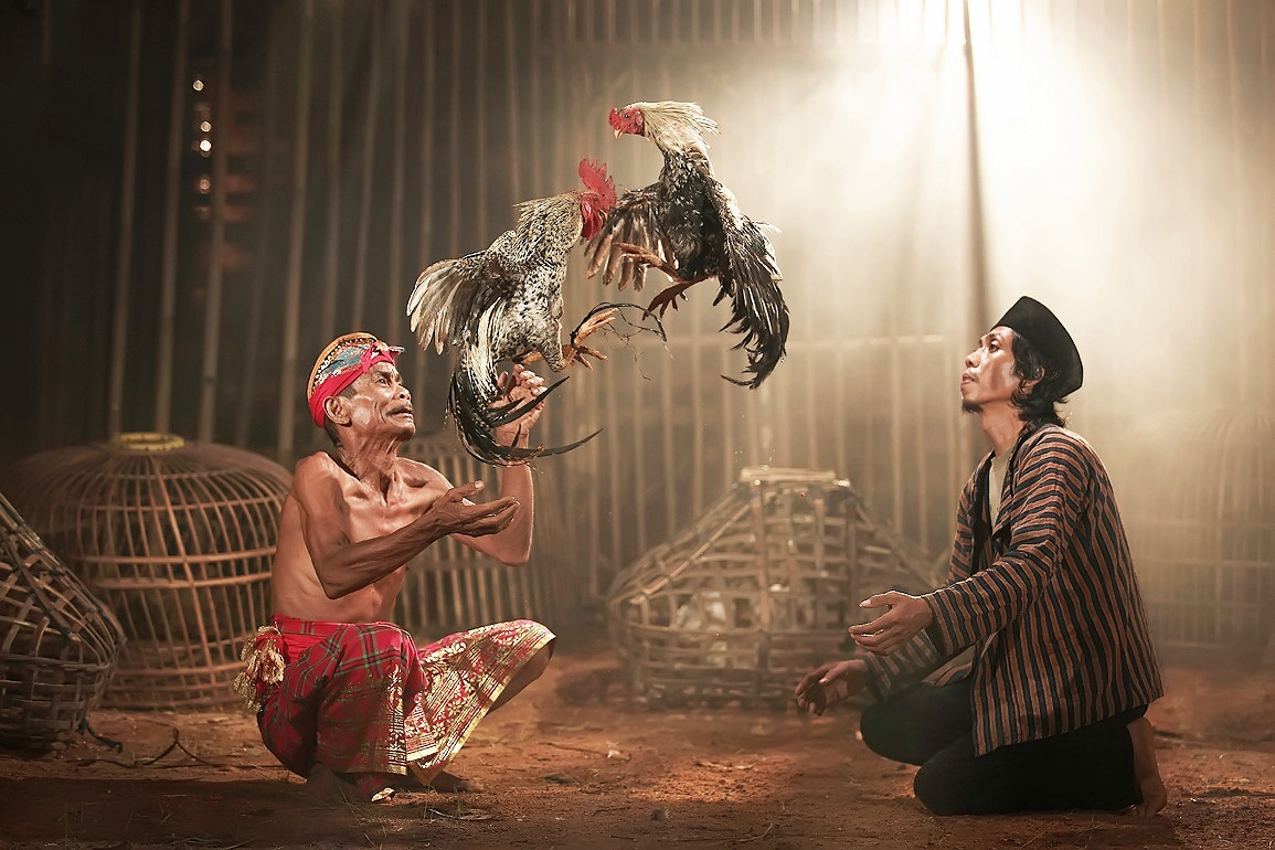 Photograph Cockfight by Rizal Arnex on 500px