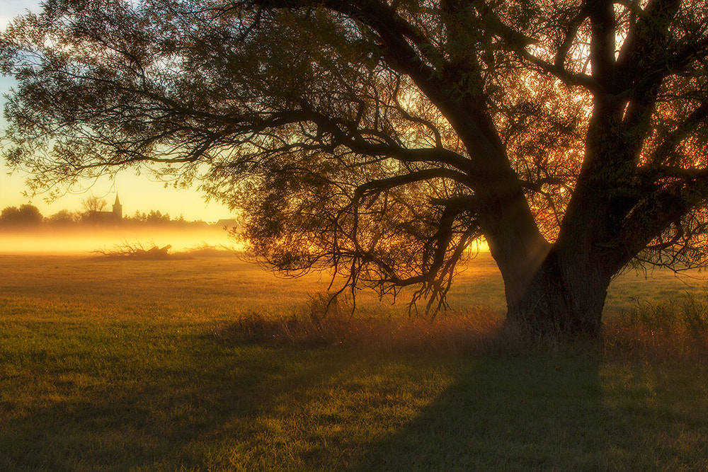 Photograph The morning light by Peter Talos on 500px