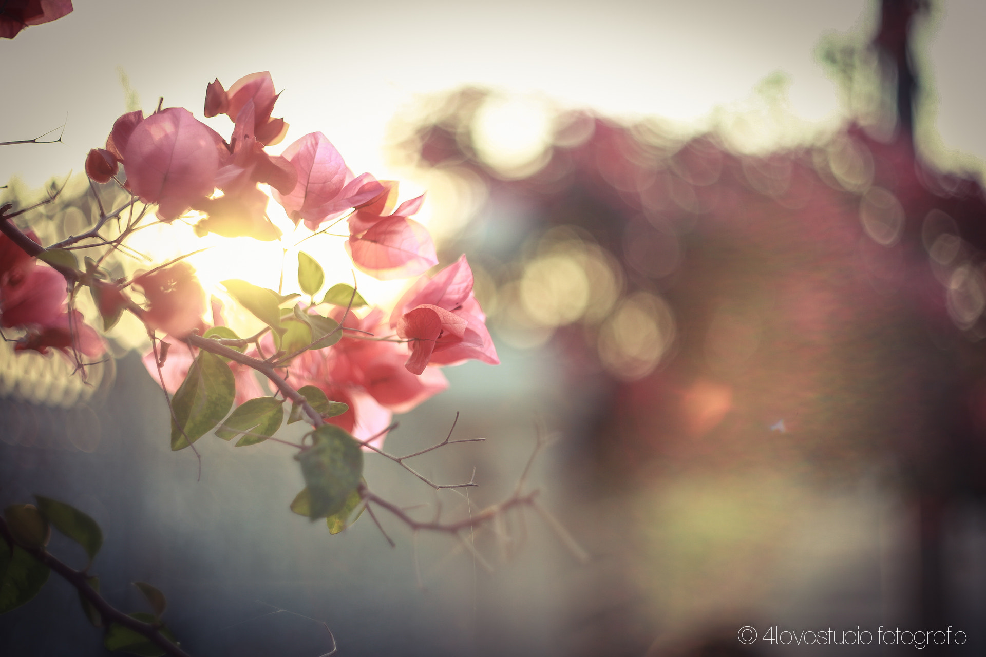 Photograph Flower in front of sunset by Rak Rmornwiwat on 500px