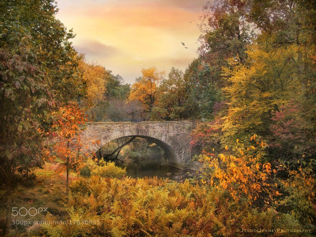 Photograph Botanical Bridge by Jessica Jenney on 500px